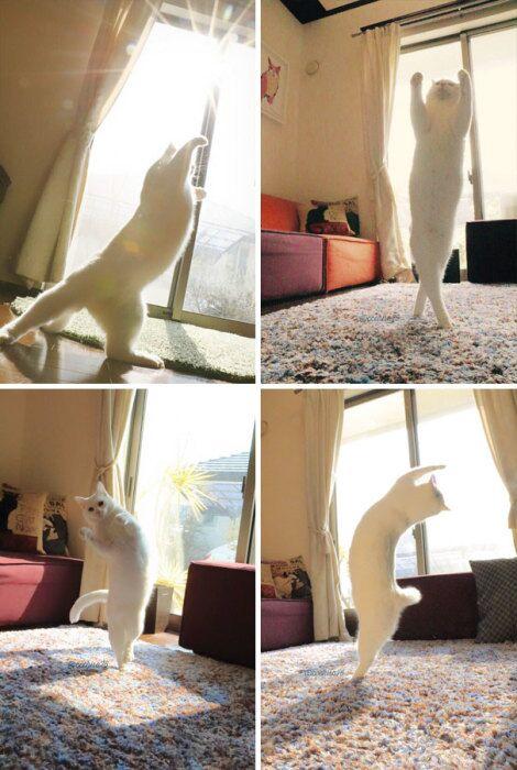 Котоматрица - 4 - Страница 9 Cats-worshiping-sun-3