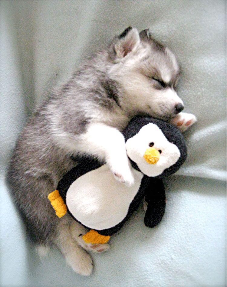 Самые милые спящие собаки. Доза умиления на весь день