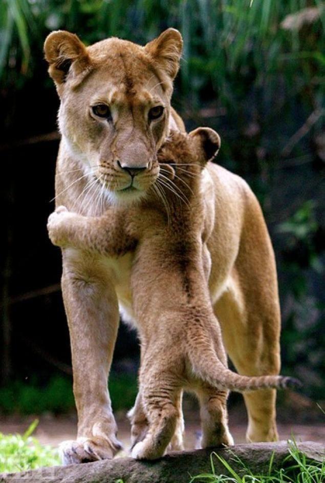 20 фото зверьков-родителей, которых распирает от гордости