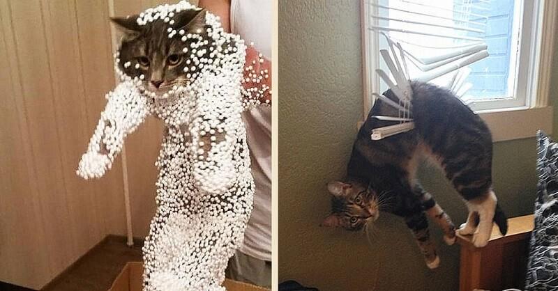 Коты, которые искали приключений и… нашли