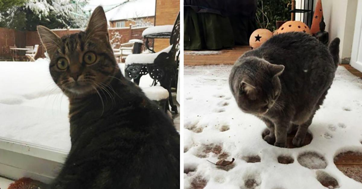 Минутка хорошего настроения или котики, которые увидели первый снег