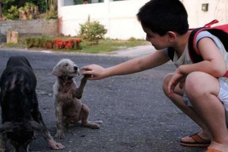 Филиппинский мальчик тратит все свои деньги на еду для бездомных собак